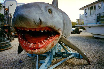 Jaws The Revenge shark | Jaws film, Jaws movie, Shark