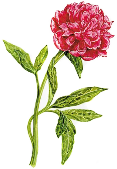 Pin Uzivatele Valerie Tumova Na Nastence Kreslene Kvetiny Drawing