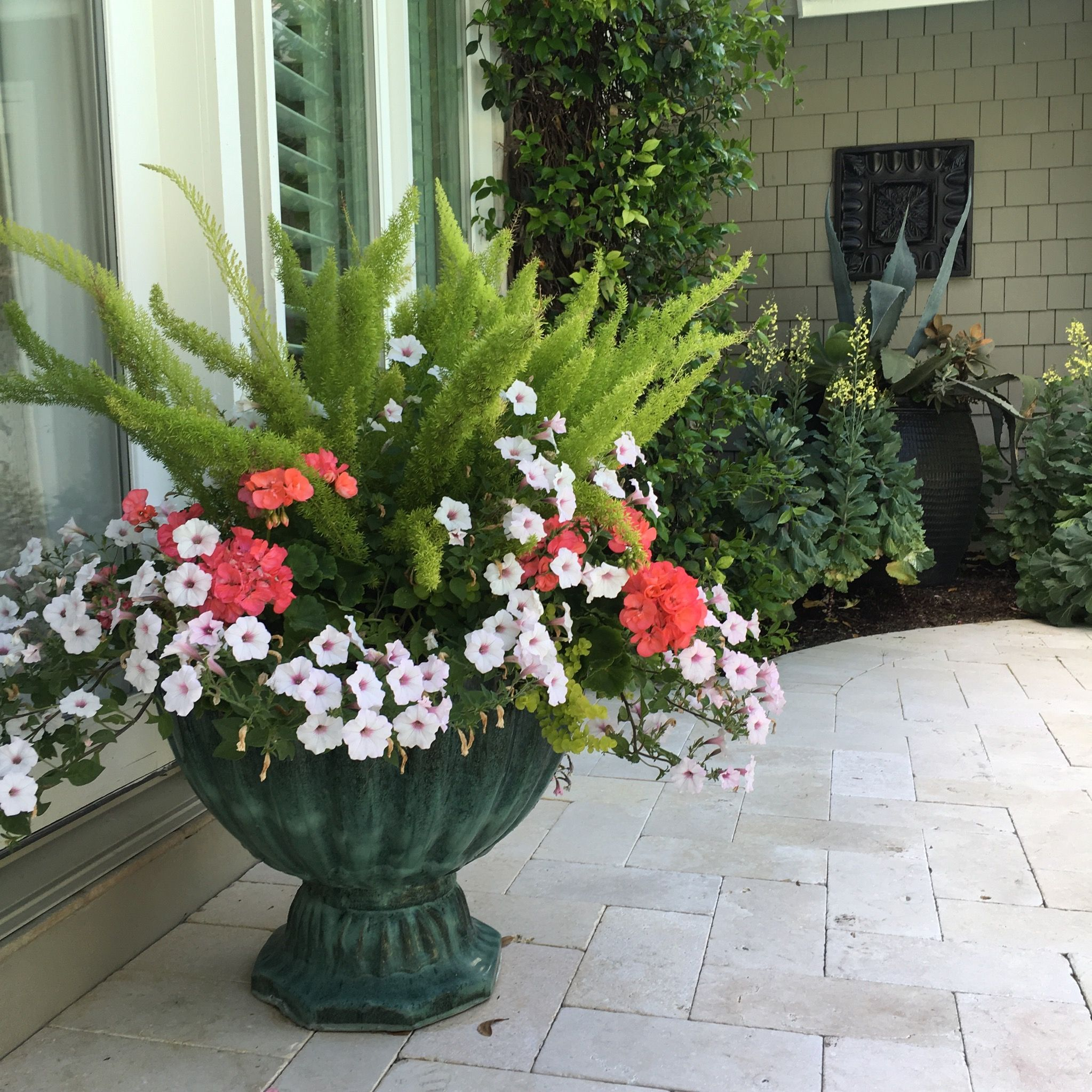 Foxtail Fern Geranium And Petunia Vine Garden Market Flower Pots Outdoor Container Flowers Container Plants