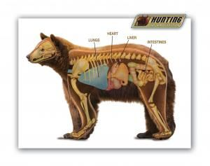 bear anatomy | Bear Hunting | Pinterest