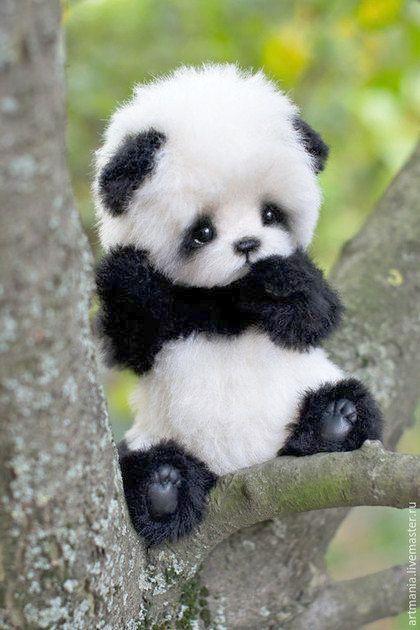 Baby Animals Look Cute Cute Baby Animals Bear Cute Baby Animals Baby Animals Super Cute Cute Little Animals