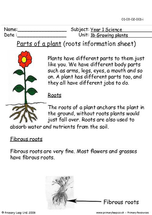 Parts Of A Plant Roots Information