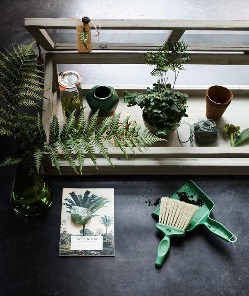 綠色,溫室,植物