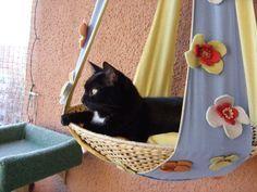 Aussichtsplateau Fur Katzen Balkon Cat Topia Gatos Caes