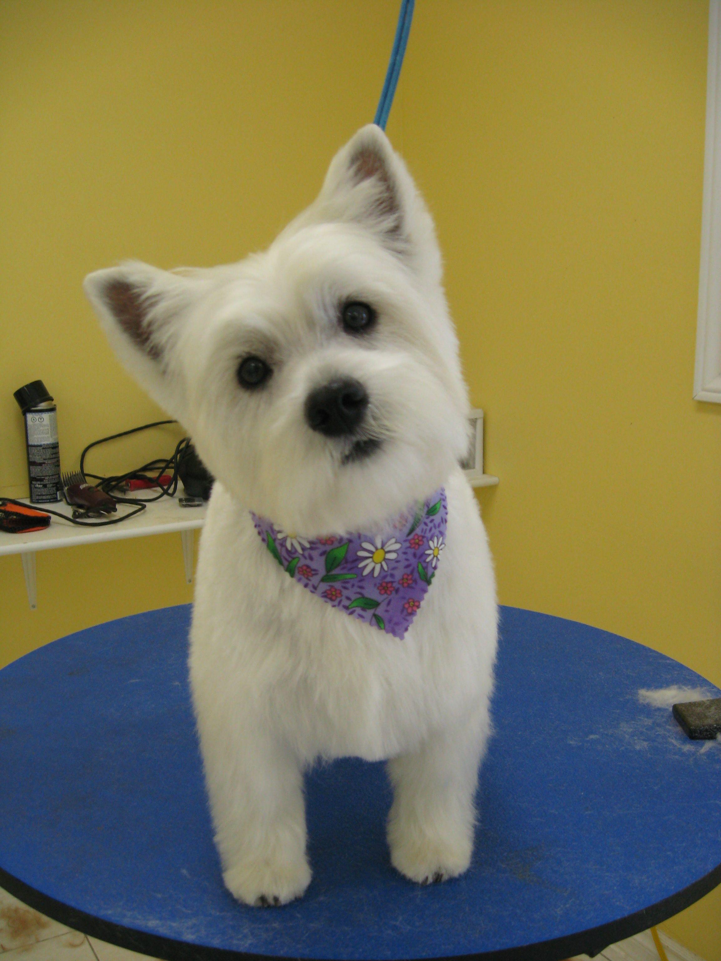 Pawsh Pet Grooming Located In Ajax 41 Harwood Ave S Unit D Www Lauramcbride Ca Pet Grooming Grooming
