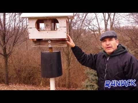 How To keep squirrels off of your bird feeder