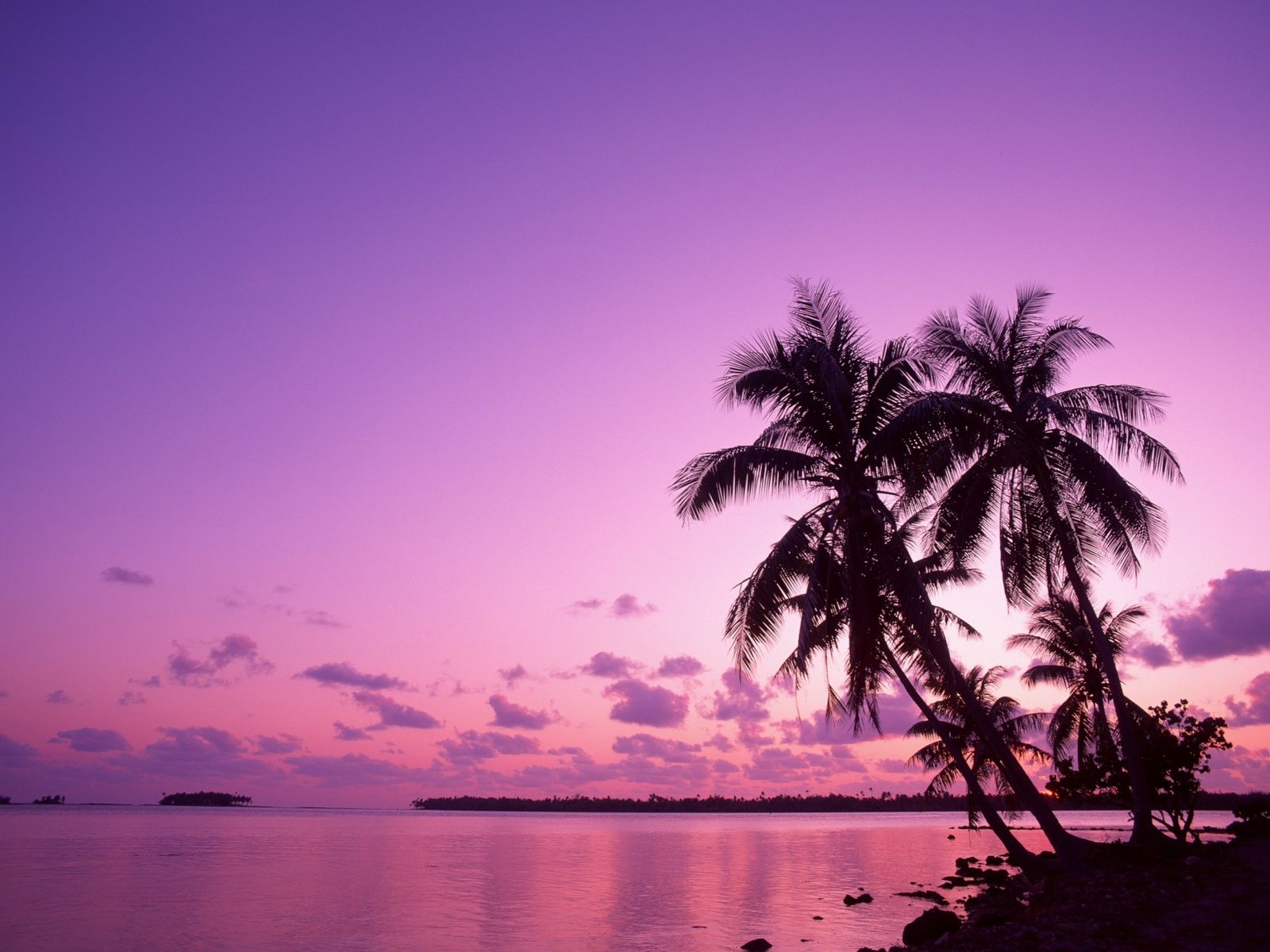 Blue Sunset With Palm Trees Widescreen 2 Hd Wallpapers Amagico