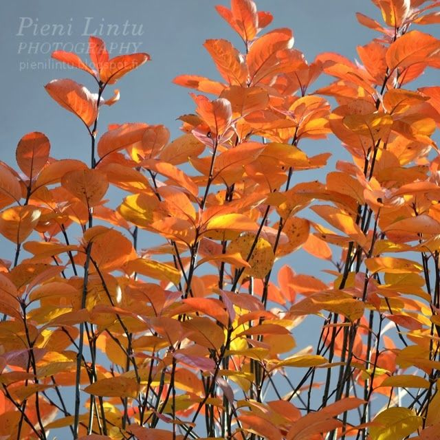 http://www.pienilintu.blogspot.fi/2013/10/autumn-colors-orange.html