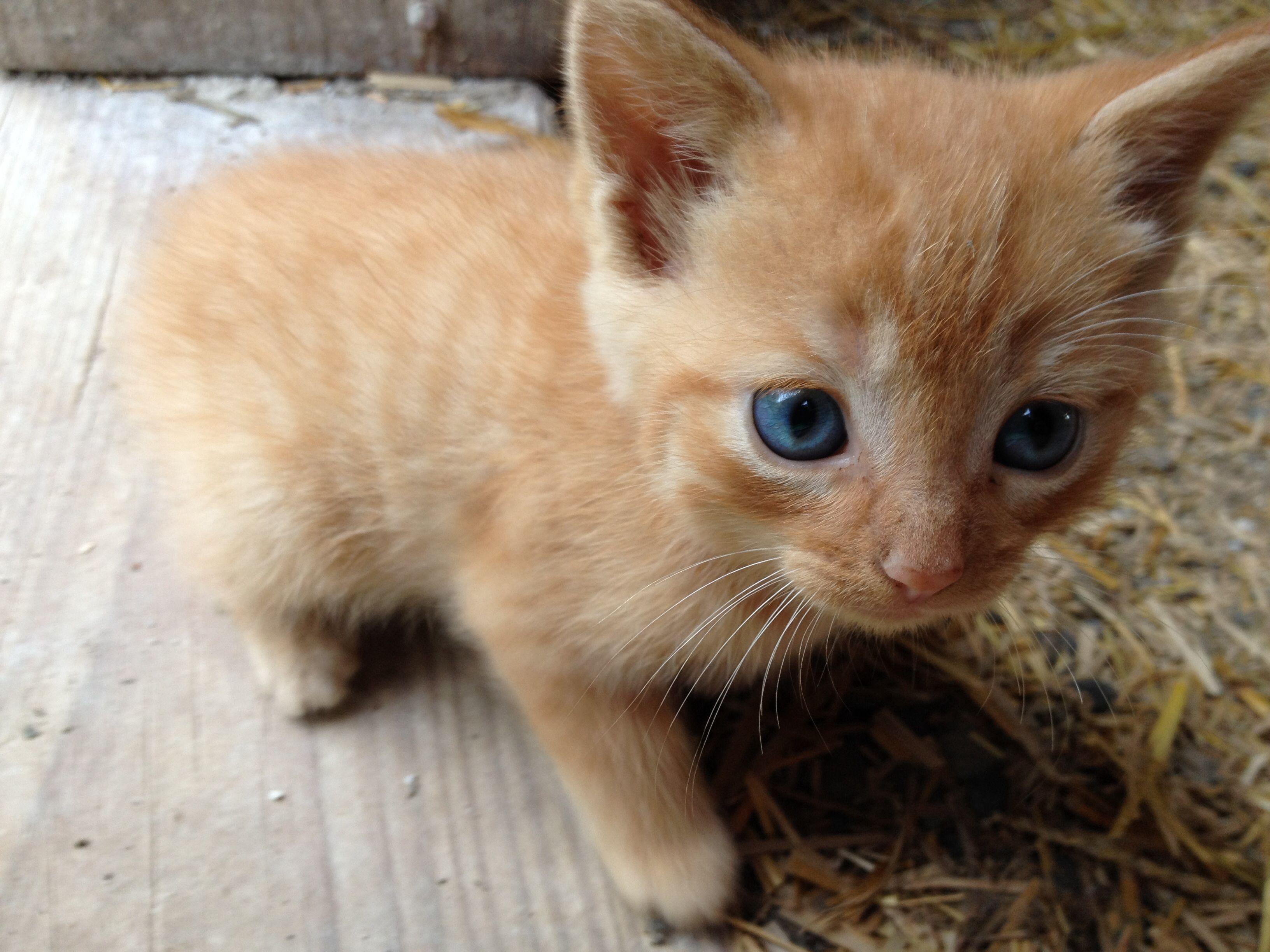 Cute barn kitten animals kittens