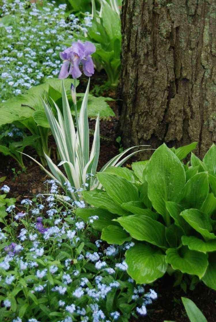 Plantes D Ombre Pour Le Jardin En 25 Photos Fascinantes Idees