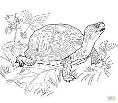 Image Result For Land Turtle Silhouette Turtle Coloring Pages