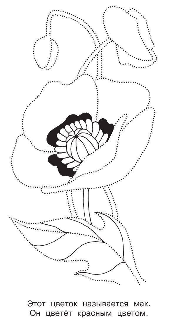 Цветок мака рисунок
