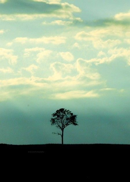 Landscape Photography Nature Picture Teal Blue Sky Clouds Minimal Tree 5x7 Inch Photo One Tree Landscape Photography Nature Landscape Photography Landscape Photos