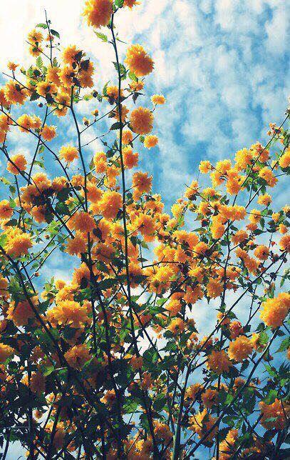Yellow Pretty Things In 2019 Flowers Yellow Flowers Beautiful