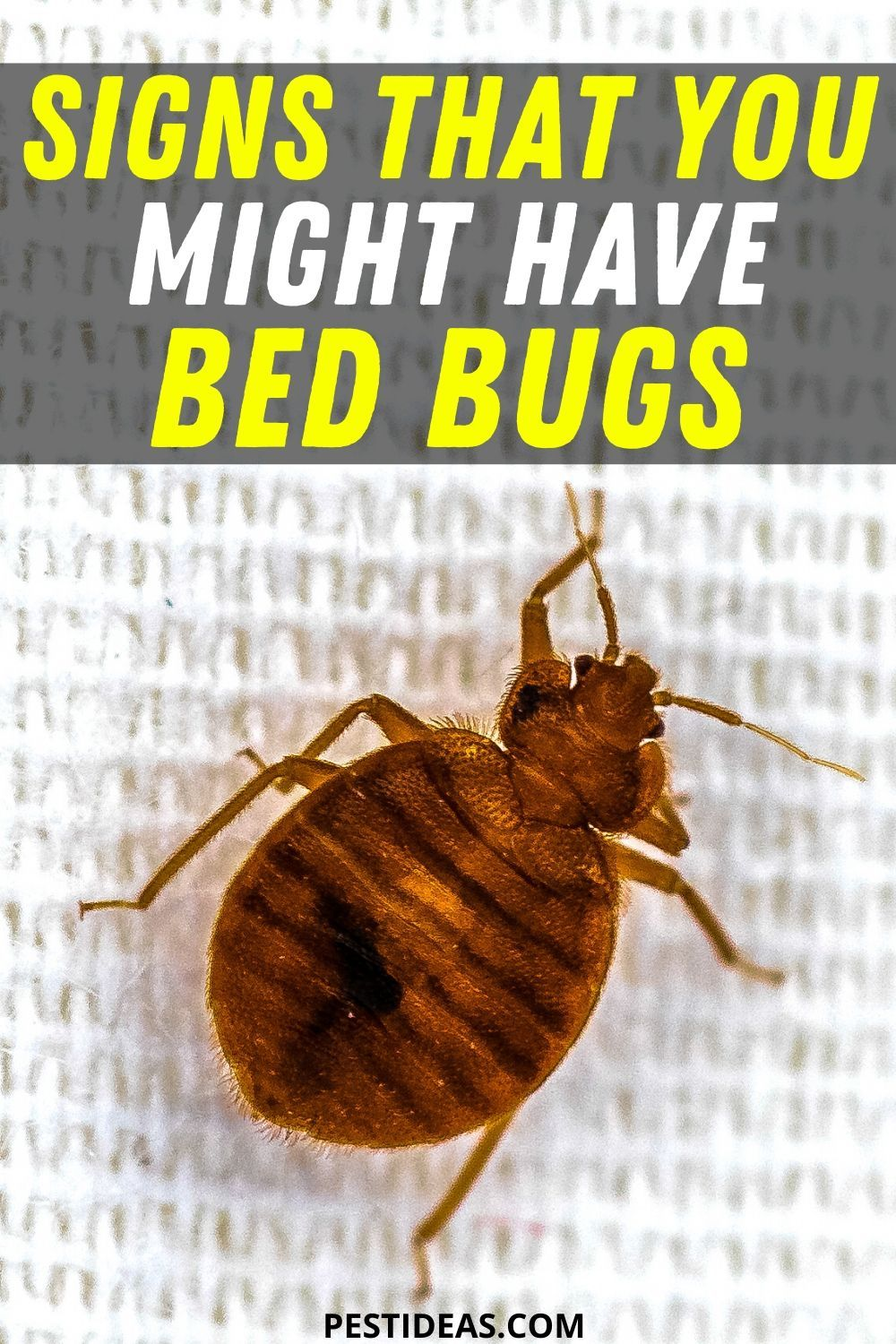 Signs That You Might Have Bed Bugs In 2020 Bed Bugs Signs Of Bed Bugs Kill Bed Bugs