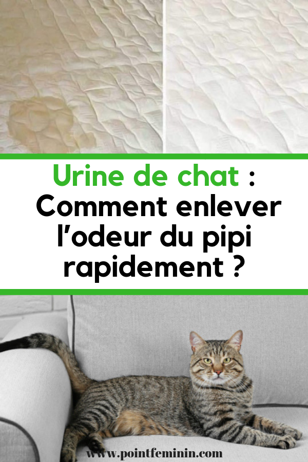 urine de chat comment enlever l 39 odeur du pipi rapidement. Black Bedroom Furniture Sets. Home Design Ideas
