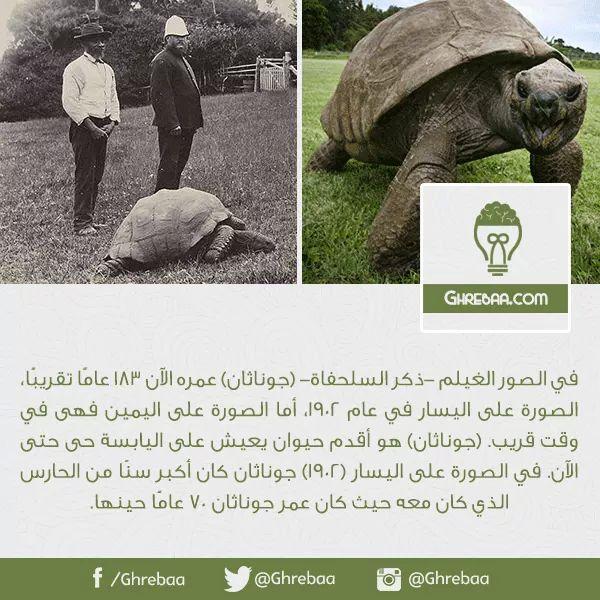 Pin By Sherif Aboul Khair On Weird غريبة Lol Elephant Lole