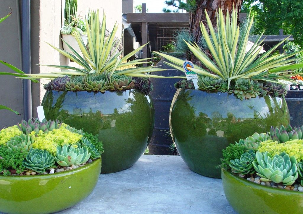 Using yellow variegated agave or smaller succulents in low