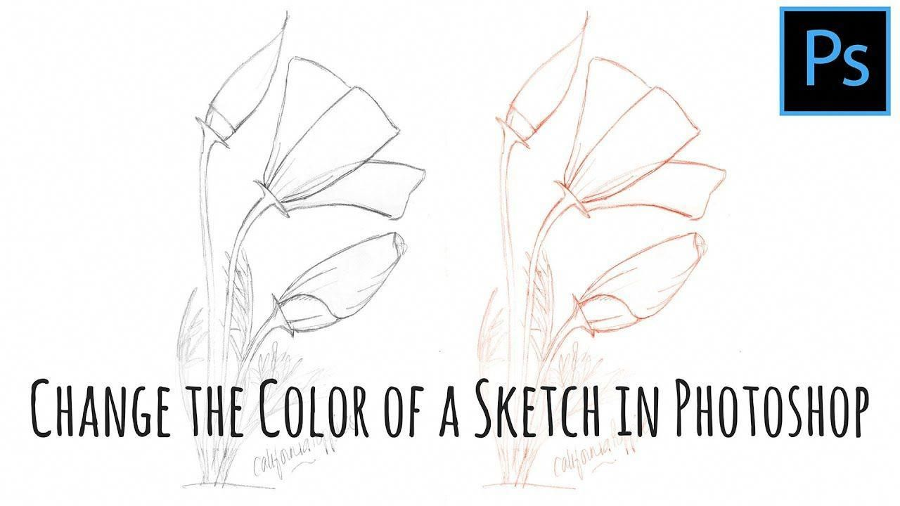 Change the color of a line art sketch