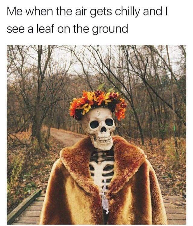 Pin by Raegan Kate on Fall☺️ | Spoopy, Halloween memes ...