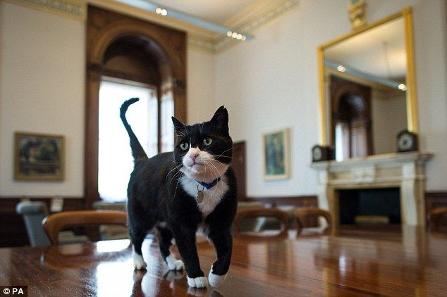 Foreign Office 'chief mouser' (With images)