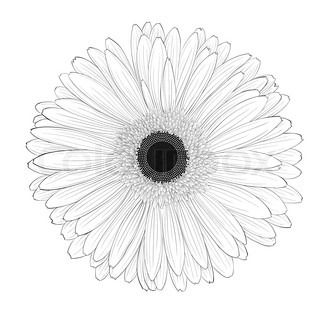 Your Search For Painted Nature Illustration Returned 996 Results With Images Gerbera Nature Illustration Flower Sketches