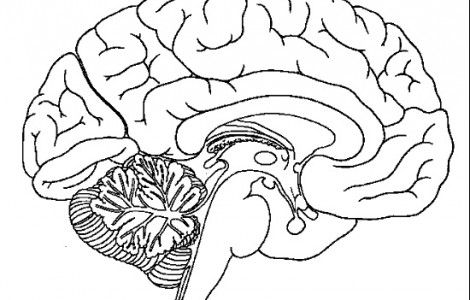 Brain Anatomy Coloring Pages Coloringpageskid.com Brain Anatomy, Brain  Diagram, Human Brain