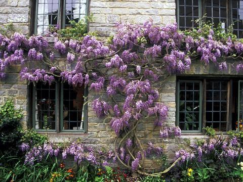 Kletterpflanzen Als Sichtschutz - Fassade Greening Glyzine ... Pergola Bepflanzen Kletterpflanzen