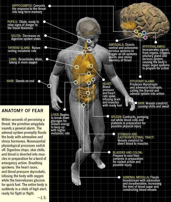 Neuroscience The Anatomy Of Fear Fear Changes Your