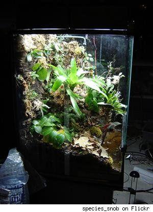 That Huge Fish Or Lizard Aquarium Makes A Perfect Tropical Terrarium