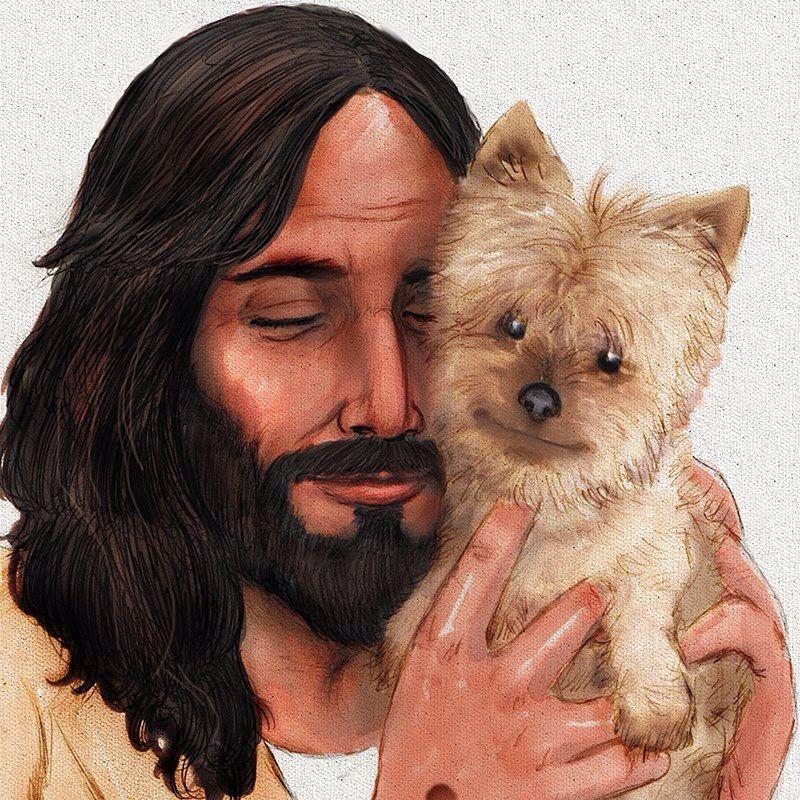 Bless yorkies's Yorkie moms, Animals, Baby dogs