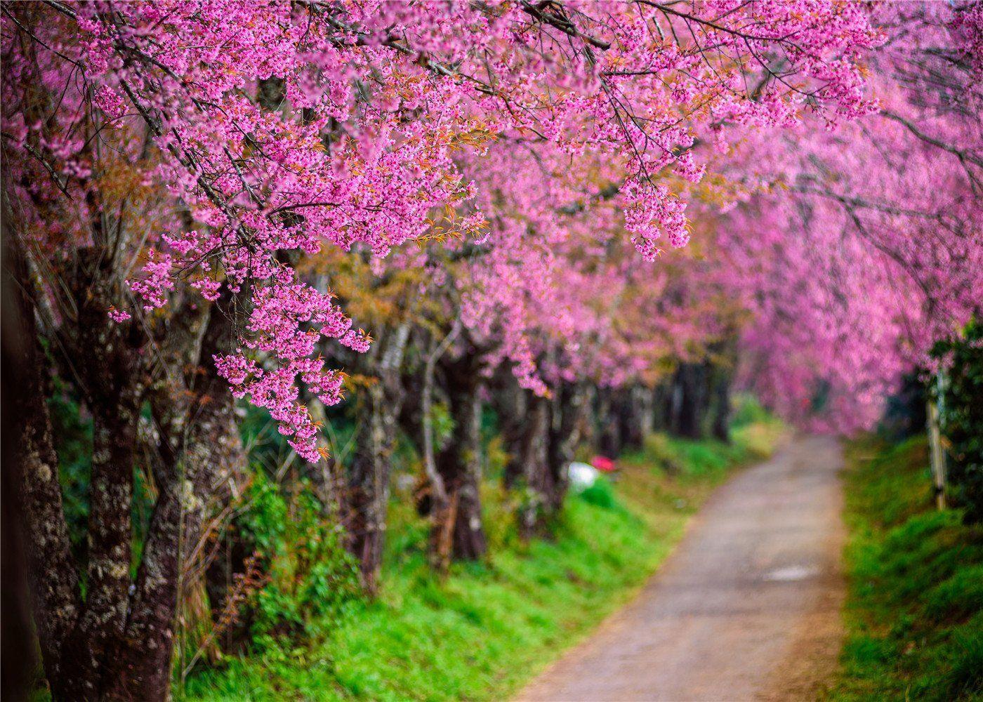 SUSU Natural Scenery Photography Backdrops