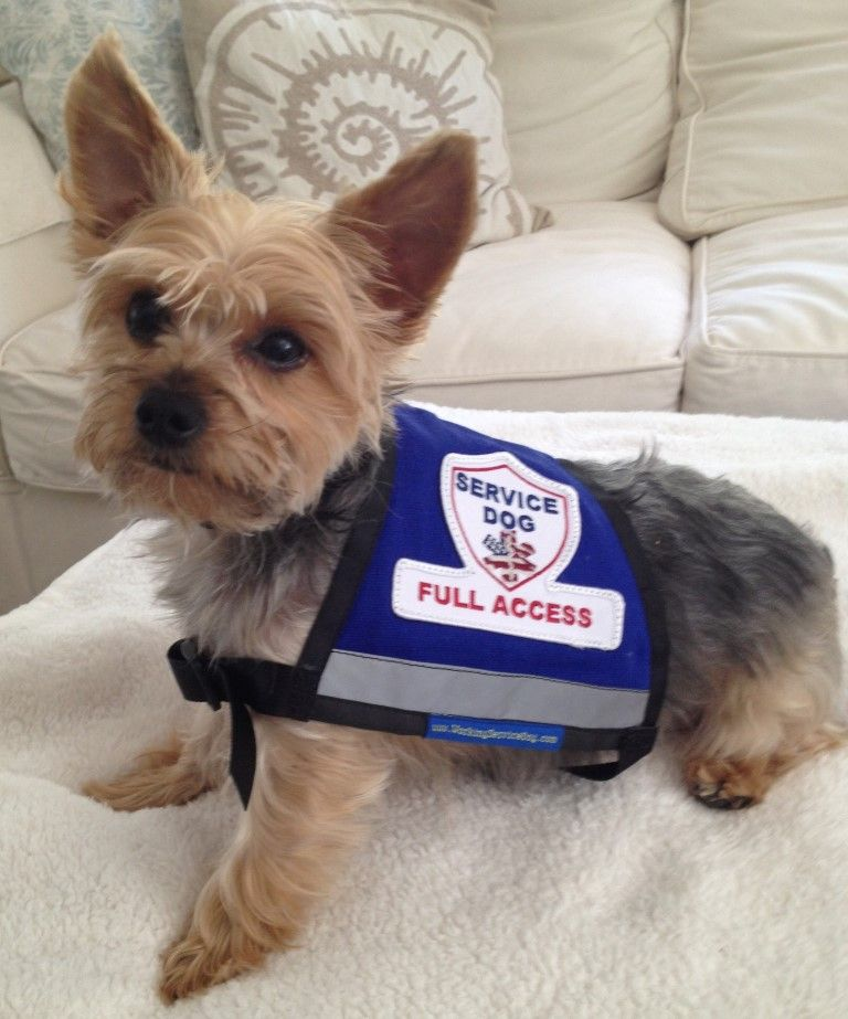 Premium Small Service Dog Vest With Premium Patch And Zipper