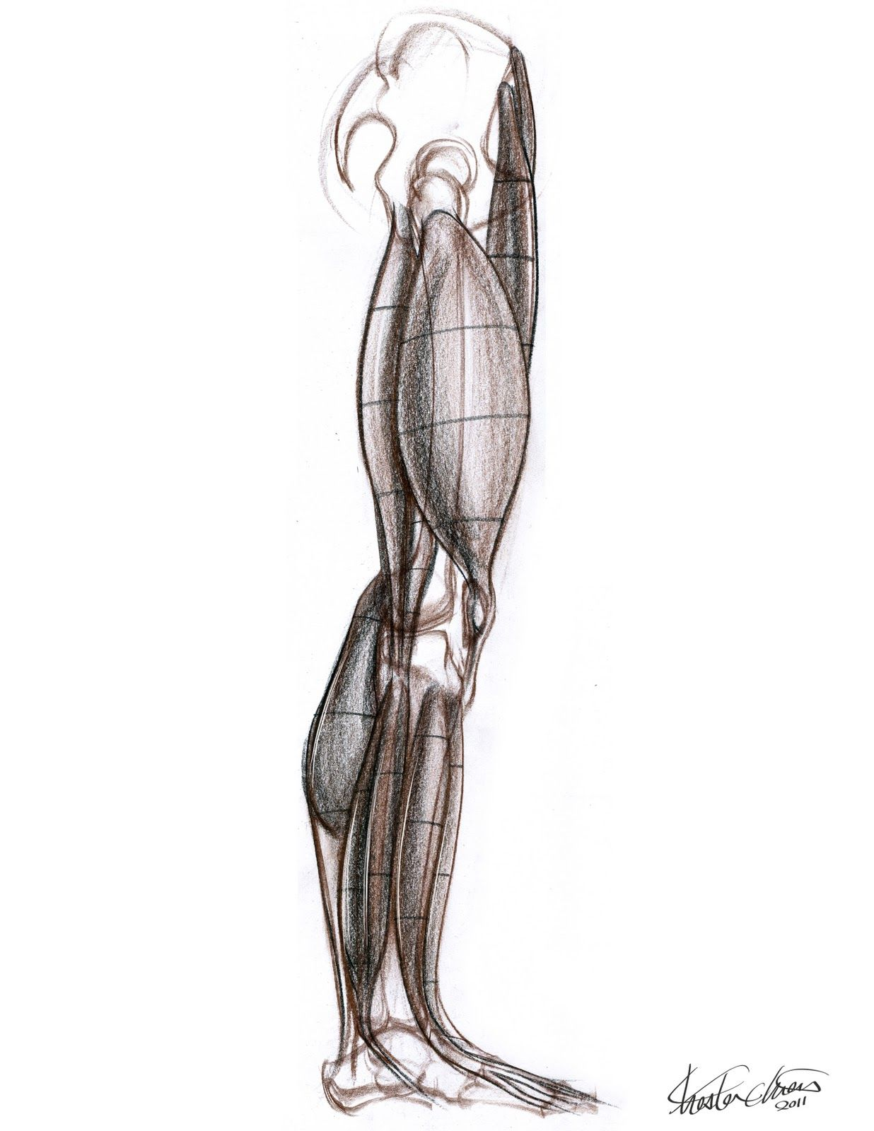 Chester Chien | reference | Pinterest | Chester F.C., Anatomy and ...