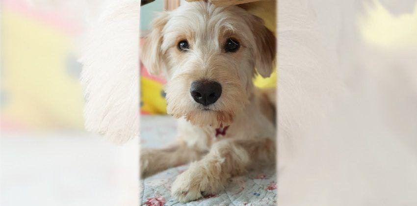 Pin De Yasser Rashwan En Dogs To Adopt