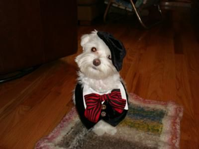 Male Dog Costumes Dog Costumes Cute Dog Costumes Dog Halloween
