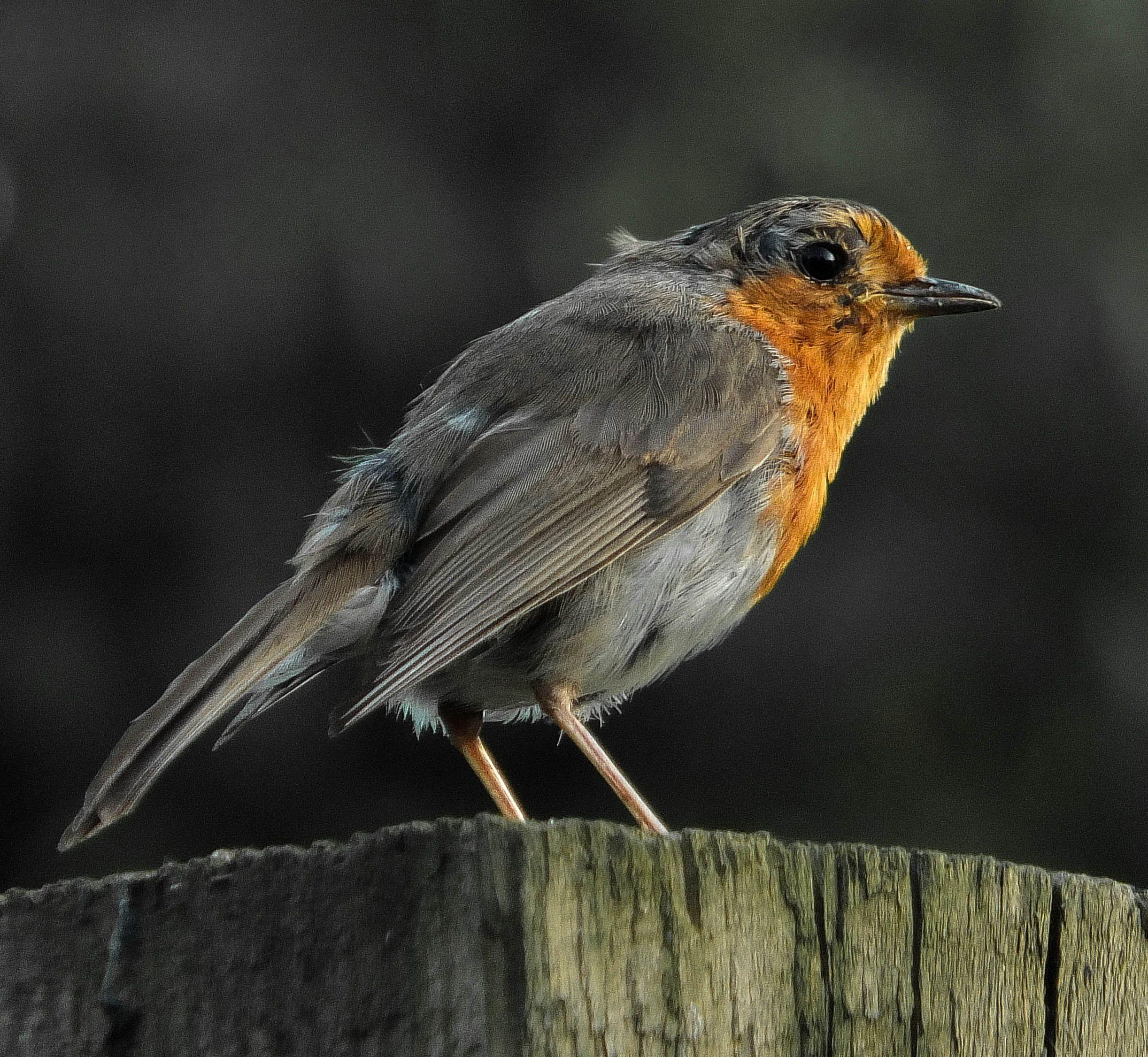 North Norfolk Nature on #FujifilmXWorld