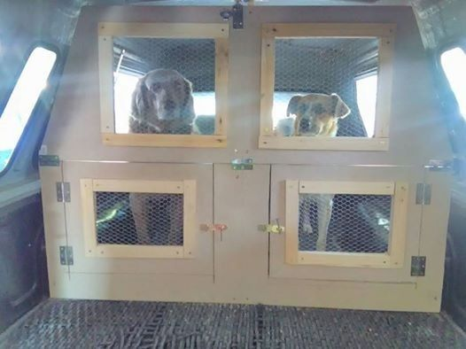 Need To Get Your Dogs Cats Birds And Household Pets Transported To The Kennels Vets Training Or Relocatin Pet Transport Pets Gumtree South Africa