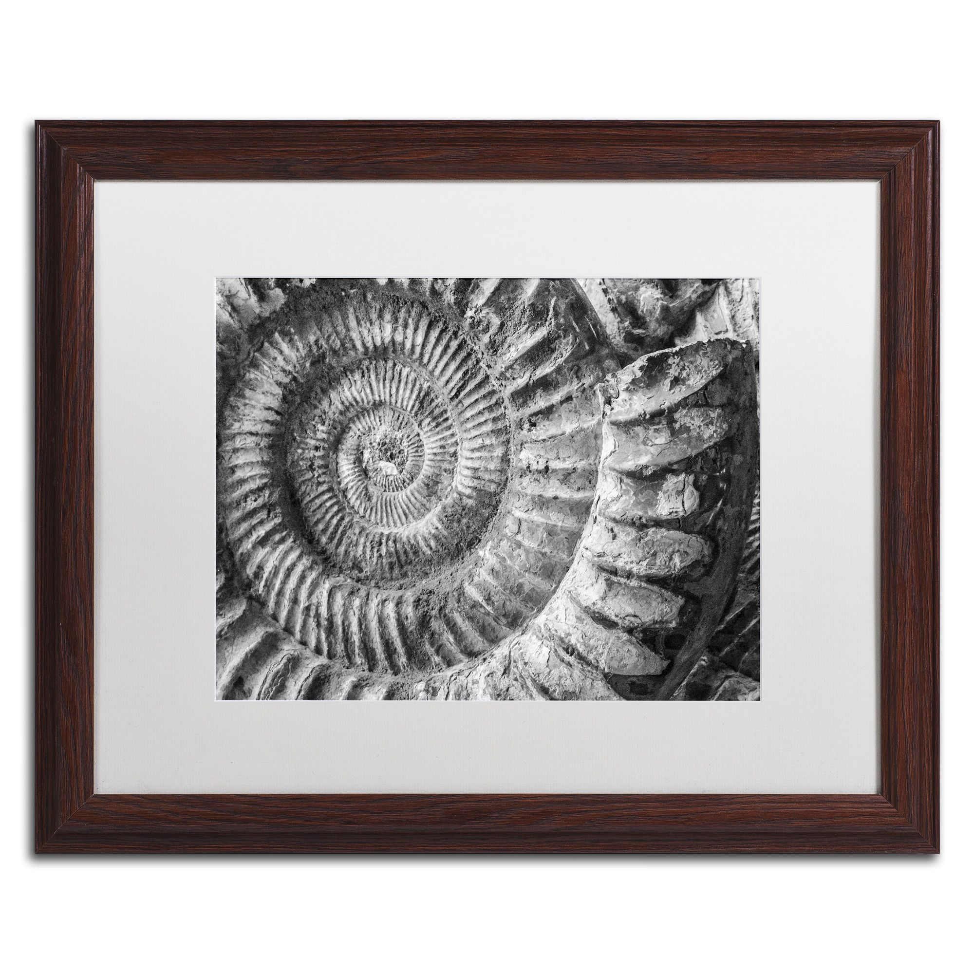 Amonita 1 by Moises Levy Framed Photographic Print | Pinterest