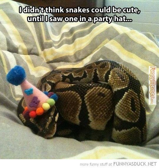 Animal memes cute snake in party hat