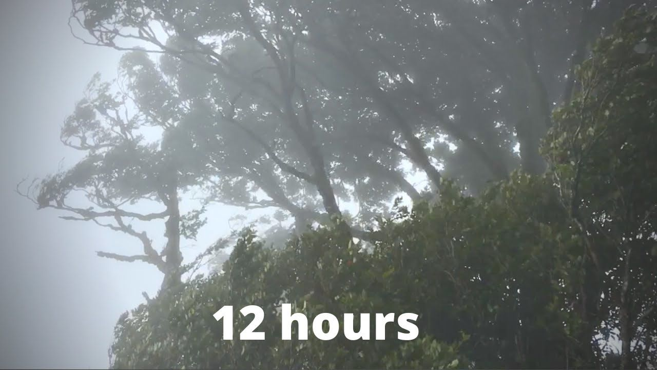Wind Sounds For 12 Hours Sound Of Wind For Relaxing Sleep Study Windy Sound Youtube In 2020 Ocean Sounds Rain And Thunder Nature Sounds