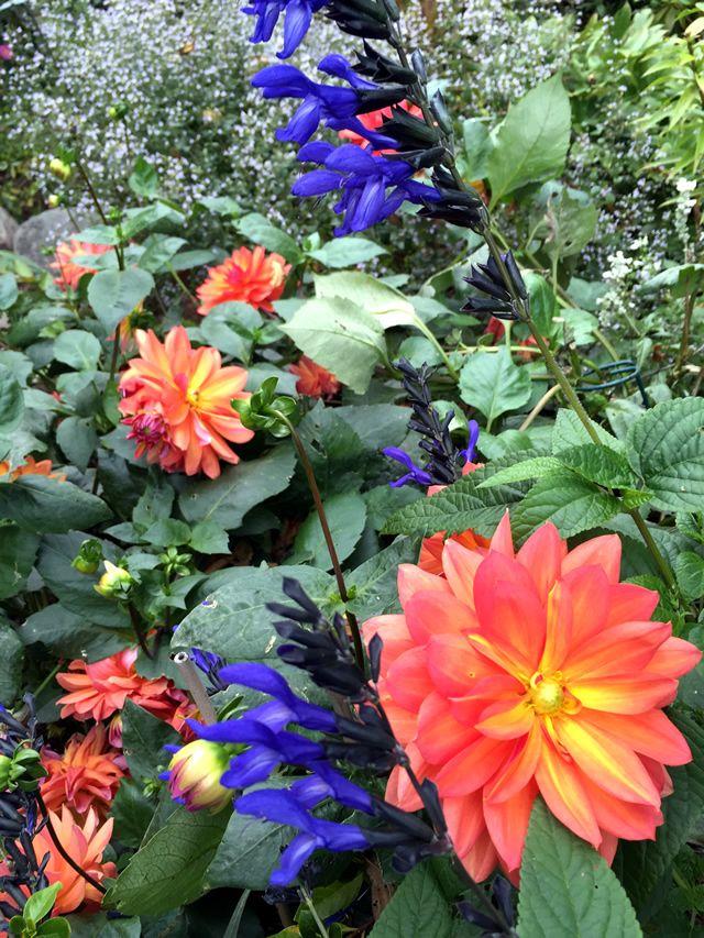 Http://www.finegardening.com/persistent Late Summer Garden