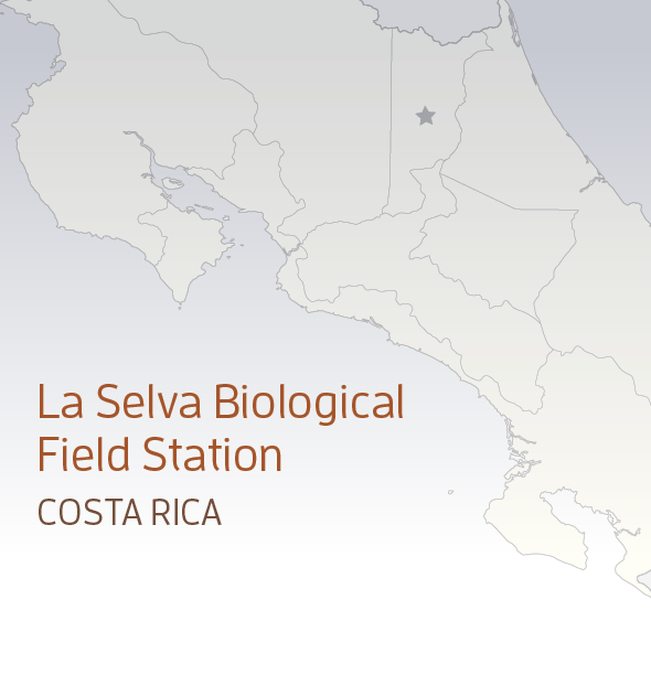 Catherine Cardelús And Students Research Rainforest Canopy Colgatescene Rainforest Rainforest Habitat Plant Species
