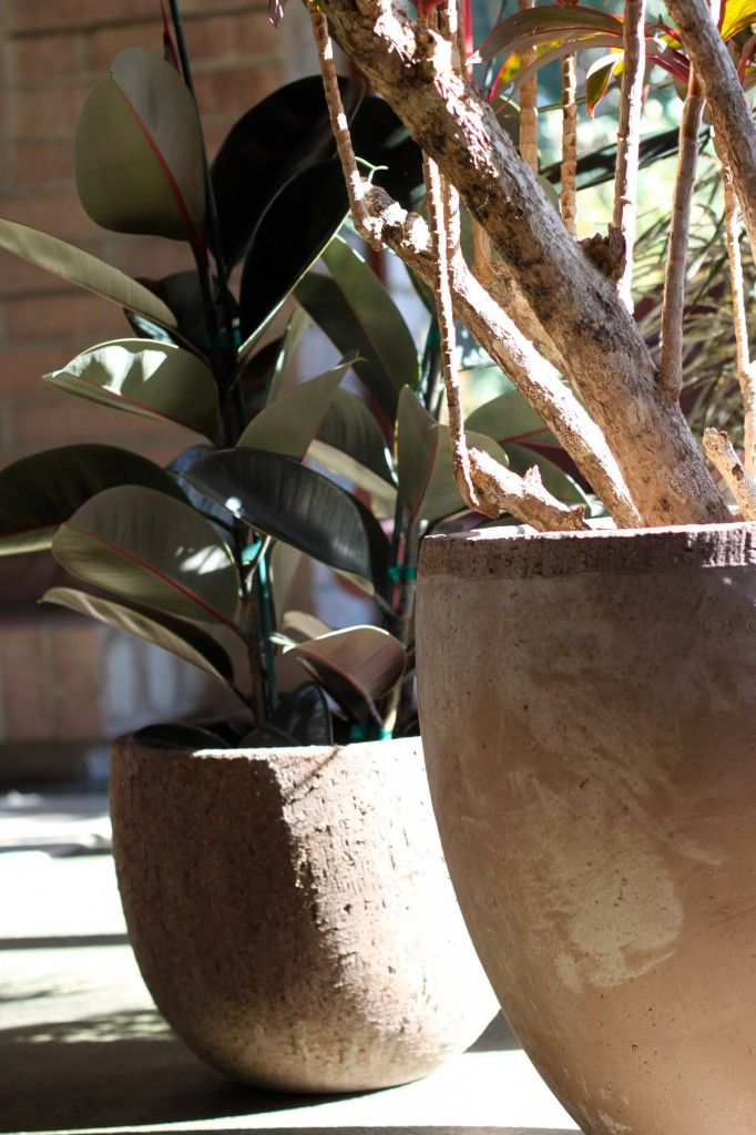 Cocoon Home | Botanical Inspiration: House Plants | http ...