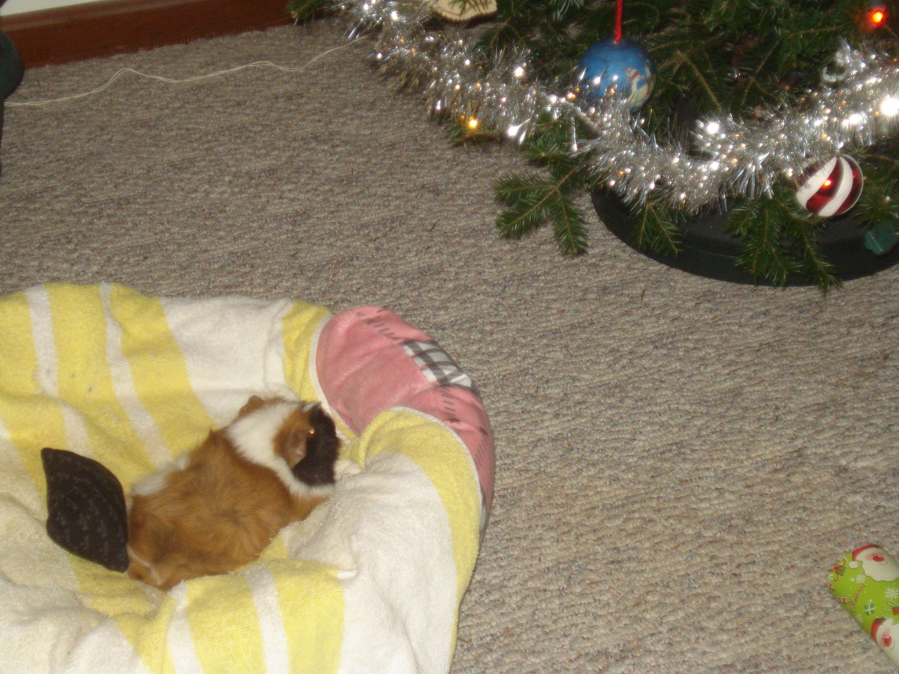 Abby & the Christmas tree.