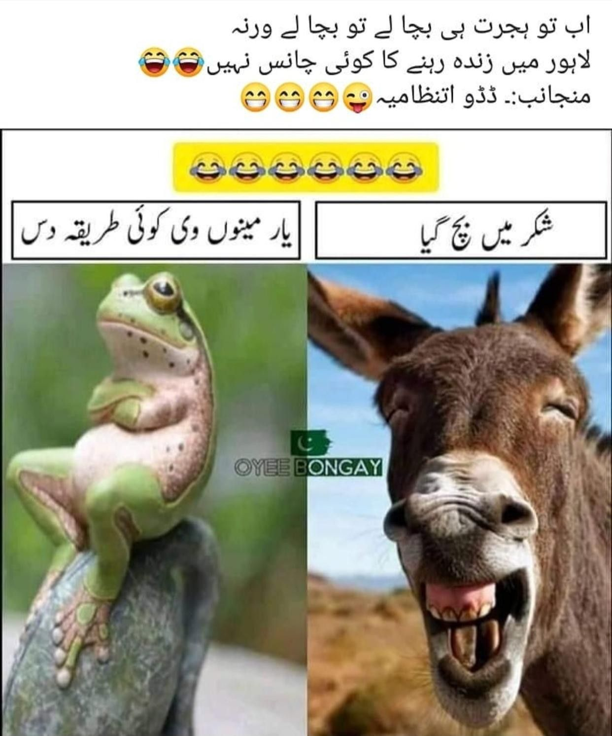 Lahorians In 2021 Funny Quotes In Urdu Funny Crush Memes Funny Words