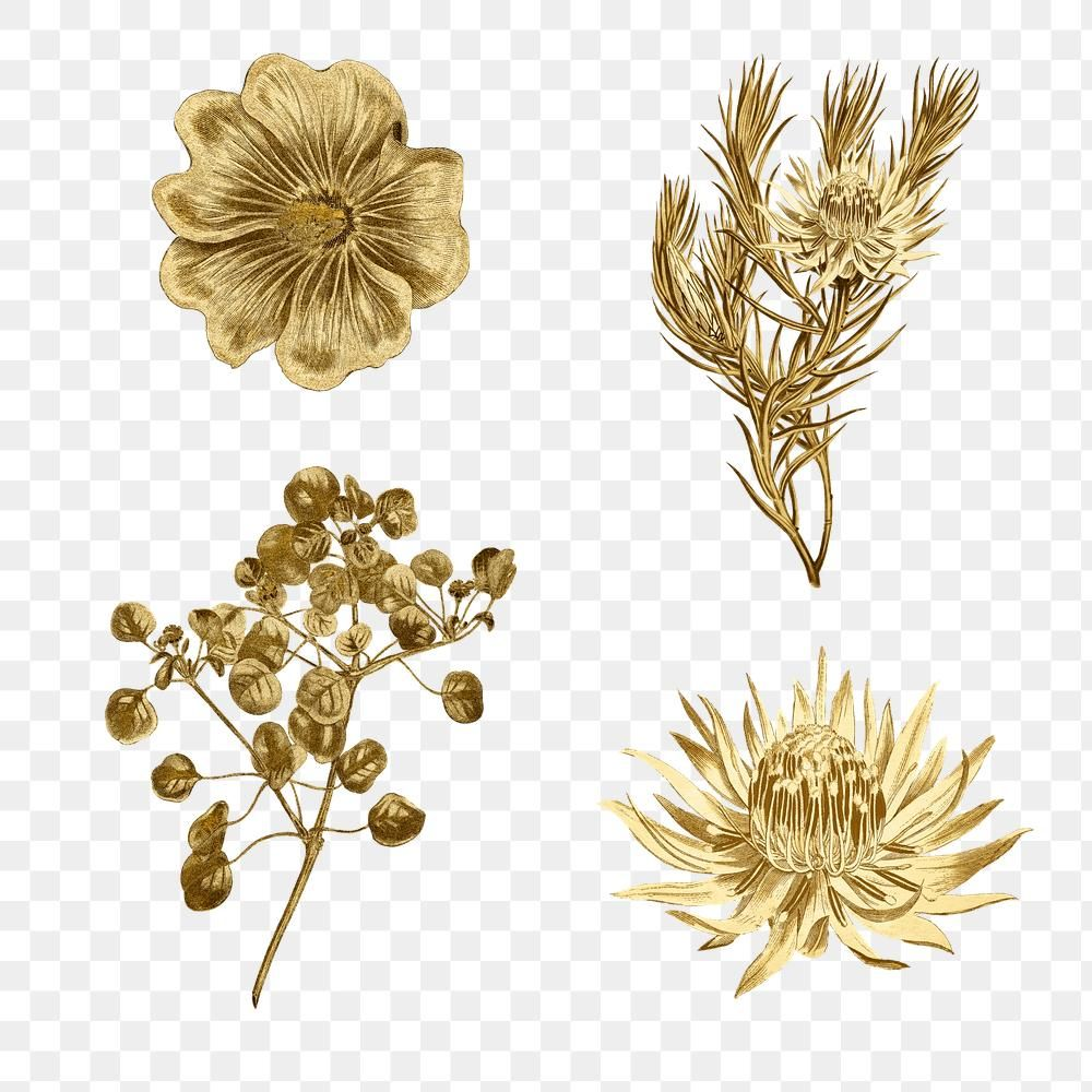 Download Premium Png Of Blooming Gold Flower Illustration Set 2368051 Flower Illustration Gold Flowers Illustration