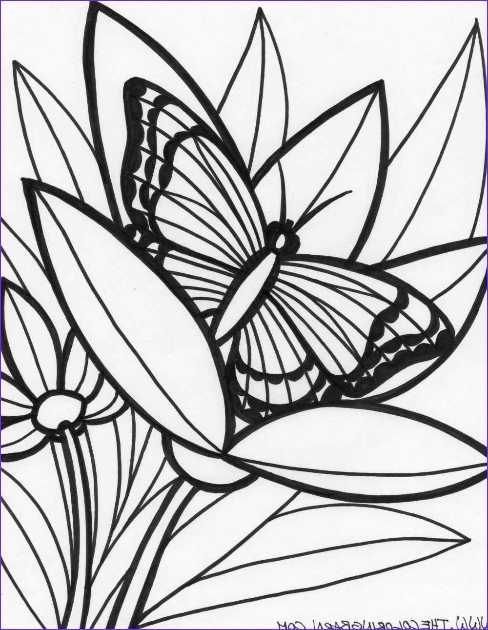 15 Beautiful Rainforest Animal Coloring Page Image Jungle Coloring Pages Animal Coloring Pages Rainforest Animals [ 1291 x 1000 Pixel ]