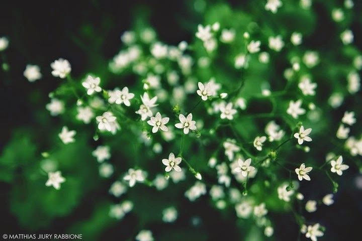 Imágenes De Flores
