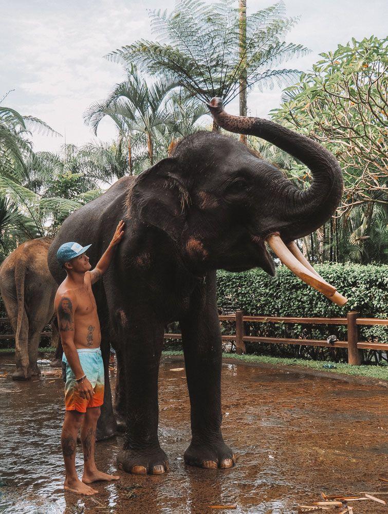 Mason Elephant Sanctuary Bali Complete Guide Jonny Melon Elephant Sanctuary Bali Elephant Elephant Sanctuary Thailand
